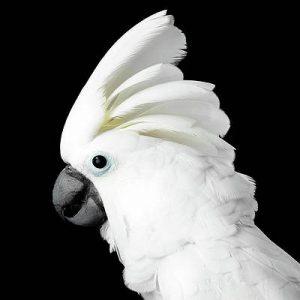 How Many Types of Doves? White Dove Bird