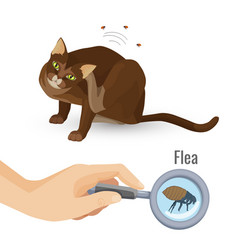 Get Rid From All Types of Parasites in Pets