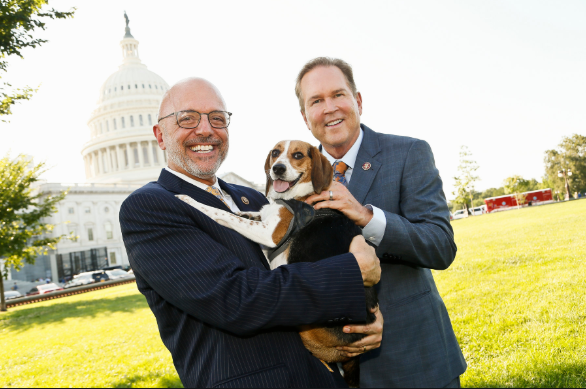 Act of Animal Cruelty|New Bill Requires Creation Of A Dedicated U.S. Branch Of Justice Division To Ensure The Enforcement Of Animal Cruelty Crimes