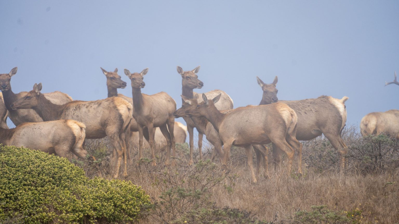 Source of inspiration! 300 Demonstrators Protest National Park Service's Plan To Kill Tule Elk and Expand Ranching In California; Your Help Is Needed Before October 18th
