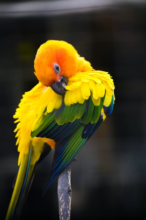 Macaw Lifespan, All Types of Macaws' Life expectancy & Price