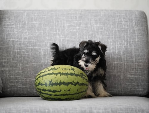 Can Dogs Eat Watermelon – Rind & Seeds