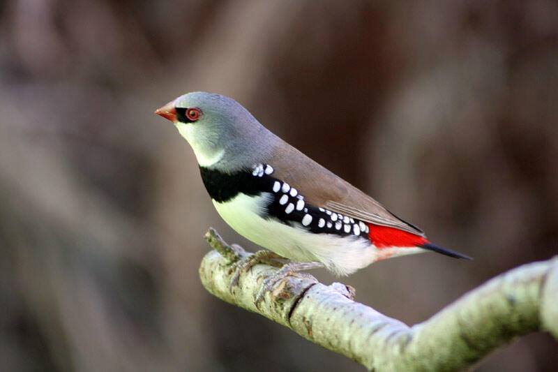 10 Popular Types of pet finches for bird lovers